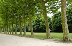 Row of trees Stock Image