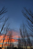 Row of trees #2. A row of trees during a beautiful sunset #2 Stock Photos