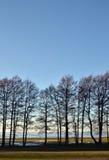 Row of trees Stock Photography
