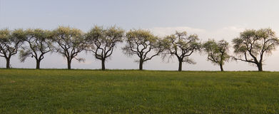 A row of trees Royalty Free Stock Images