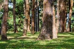 row trees Arkivbild