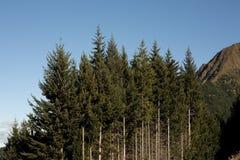 row trees Fotografering för Bildbyråer