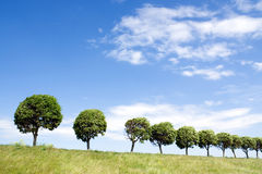Row of the trees. At summer day Royalty Free Stock Photos