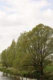 row trees Arkivfoto