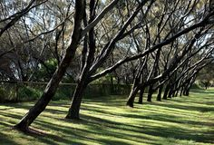 Row of Trees Royalty Free Stock Images