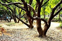 row trees Royaltyfria Foton