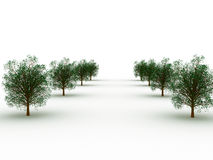 Row of trees. 3d render of row of green trees Royalty Free Stock Image