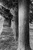 Row of trees. Alley with a long row of trees Stock Image