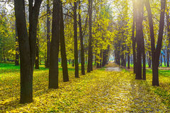 Row of Trees Along Park Road in Autumn Stock Photography