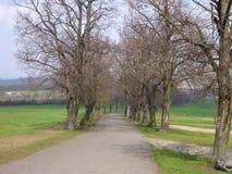 Row of trees along a road Royalty Free Stock Photo