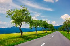 Row of trees along the road in to the mountains. Row of trees along the country road in to the distant mountains. beautiful summer landscape with stunning Royalty Free Stock Photo
