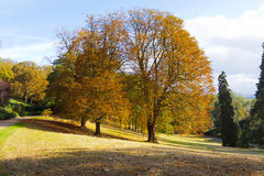 Row of  trees in autumn colours Stock Image
