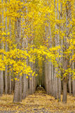 Row of trees with autumn leaves with a path Stock Photo