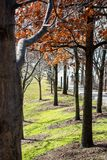 A row of trees in autumn. In a park in Brooklyn Royalty Free Stock Image