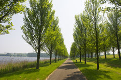 Row trees and bike path Stock Photos