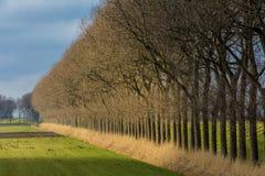 Row of trees bordering a farm field. A row of trees bordering a farmers field in weak winter sun Royalty Free Stock Photos
