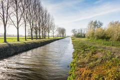 Row of trees and a canal in the fall season Stock Image
