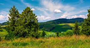 Row of trees on Carpathian hills. Beautiful countryside scenery of mountainous rural area Royalty Free Stock Photography