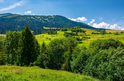 Row of trees on Carpathian hills. Beautiful countryside scenery of mountainous rural area Royalty Free Stock Photos