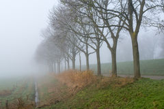 Row of trees in a dense fog Royalty Free Stock Photo