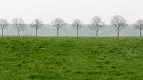 Row of trees in the early morning Stock Photos