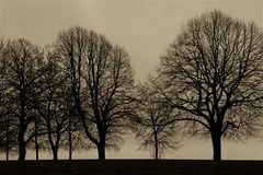 Row of trees in the early spring by the ocean. Royalty Free Stock Photography