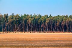 Row of trees at end of a beach royalty free stock photo