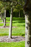 Row of trees in an english country garden Stock Image