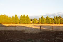 Row of trees on a farm Stock Photo