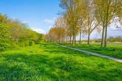 Row of trees in a field along a canal in spring Stock Photo
