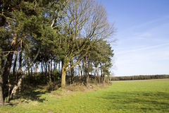 Row of Trees in a Field Royalty Free Stock Photo