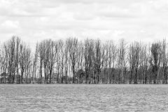 Row of trees in flooded landscape Royalty Free Stock Photography