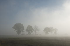 Row of trees in fog Stock Photos