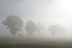 Row of trees in fog Stock Images