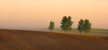 Row of trees in fog in autumn stock images