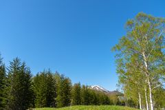 Row of trees on foreground mountains with vast blue sky on background royalty free stock photos