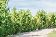 Row of trees on forest stock images