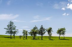 Row of trees on a golf course Stock Photography