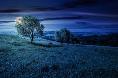 Row of trees on grassy slope at night. In full moon light. lovely countryside in summer Stock Photos