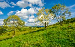 Row of trees on the grassy slope. Warm autumn weather with beautiful sky Royalty Free Stock Photos