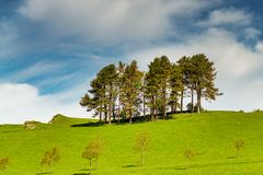 A row of trees on a grassy slope. Royalty Free Stock Photo