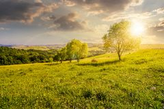 Row of trees on grassy slope at sunset. Lovely countryside in summer Stock Photos