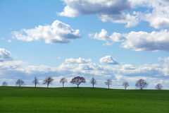 Row of trees on a green field against blue sky with clouds Royalty Free Stock Images