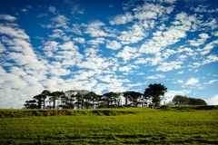 A row of trees on the green hill. And sky with clouds Stock Photos
