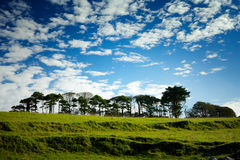 Row of trees on the green hill Stock Image