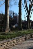 Row of Trees and Hagia Sophia royalty free stock photo