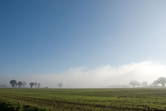 Row of trees  and a hedgerow  in fog Royalty Free Stock Photos