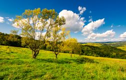 Row trees a hillside in autumn. Lovely countryside scenery in mountains under the blue sky with fluffy clouds Stock Images