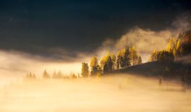 Row of trees on hillside in rising fog. Gorgeous scenery in mountains at sunrise. inspiring mood and colors Royalty Free Stock Image