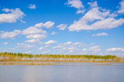 A row of trees in lake Stock Photo